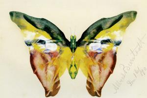 Art Prints of Butterfly by Albert Bierstadt