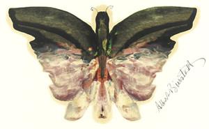 Art Prints of Pink Butterfly by Albert Bierstadt