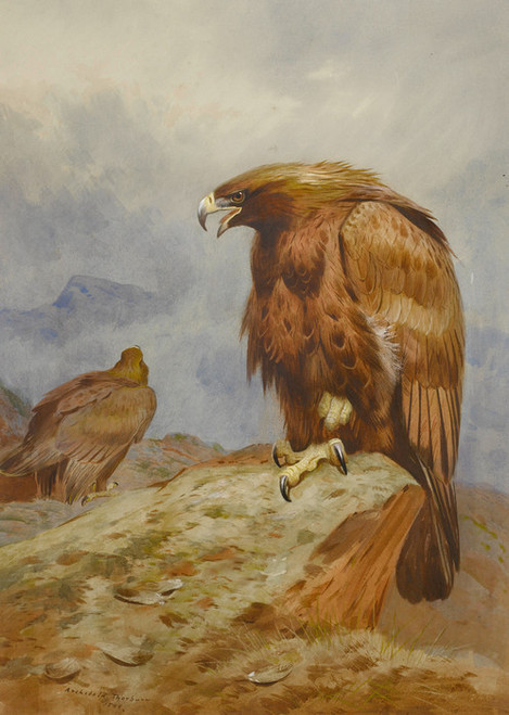 Art Prints of Pair of Golden Eagles by Archibald Thorburn