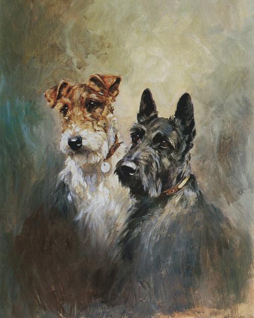 art prints of a scottish terrier  u0026 a wire hair fox terrier