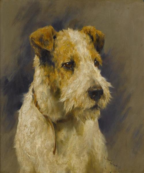 Art Prints of A Fox Terrier by Arthur Wardle