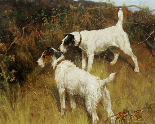 Art Prints of Ready to Pounce by Arthur Wardle
