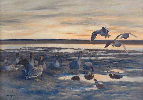 Art Prints of Bean Geese Shedding by Bruno Liljefors