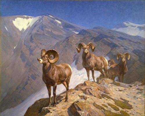 Art Prints of Bighorn Sheep on Wilcox Pass by Carl Rungius