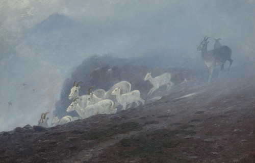 Art Prints of Ewes by Carl Rungius