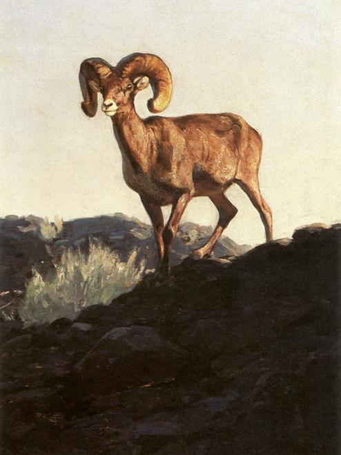 Art Prints of Desert Ram by Carl Rungius