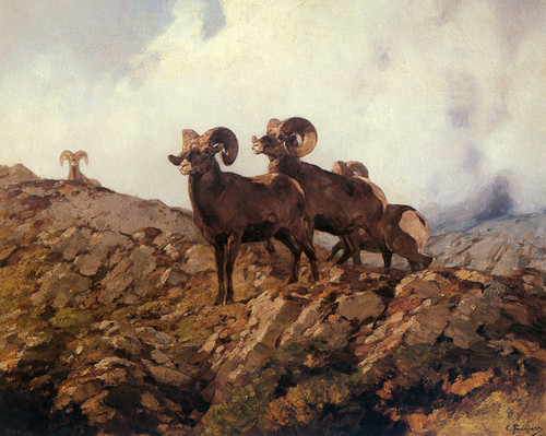 Art Prints of Rocky Mountain Sheep by Carl Rungius