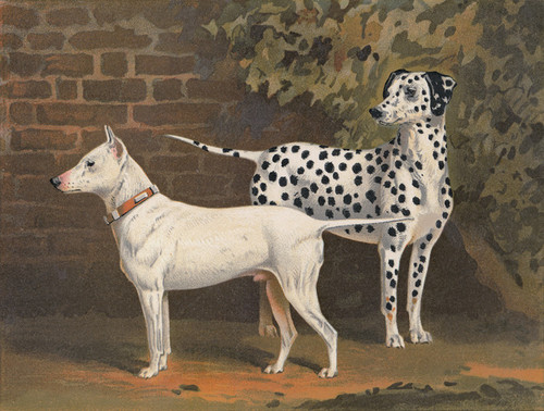 Art Prints of Bull Terrier Tarquin and Dalmatian Captain by Vero Shaw