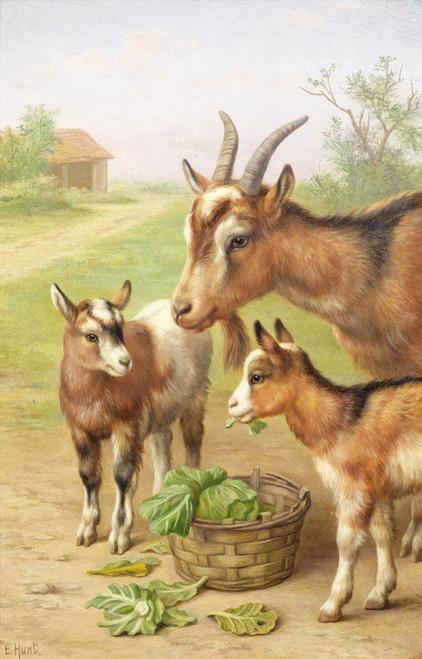 Art Prints of Goats in a Farmyard by Edgar Hunt