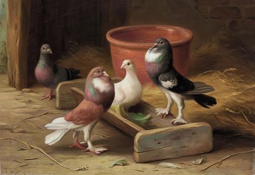 Art Prints of Pigeons I by Edgar Hunt