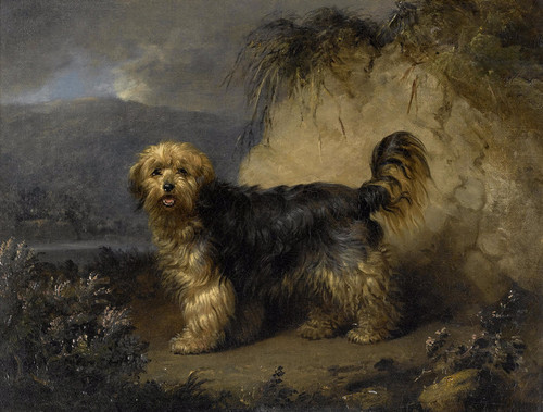 Art Prints of A Bearded Collie in a Landscape by Edmund Bristow
