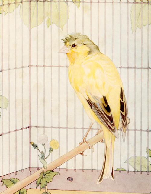 Art Prints of Canaries by Edward Julius Detmold