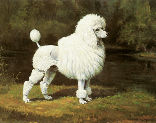 Art Prints of Champion Blakeen Eiger, Poodle by Edwin Megargee