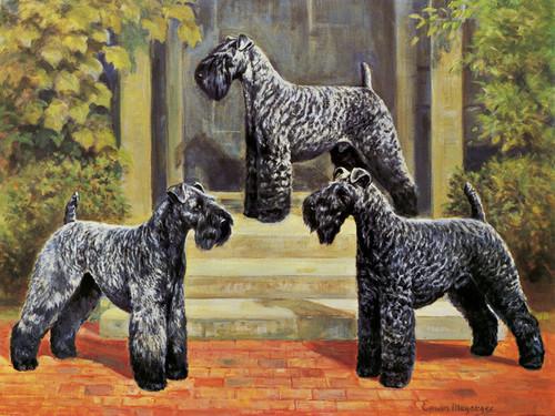 Art Prints of Kerry Blue Terriers by Edwin Megargee