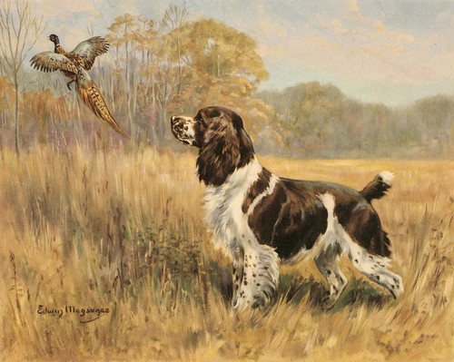 Art Prints of Springer Spaniel by Edwin Megargee