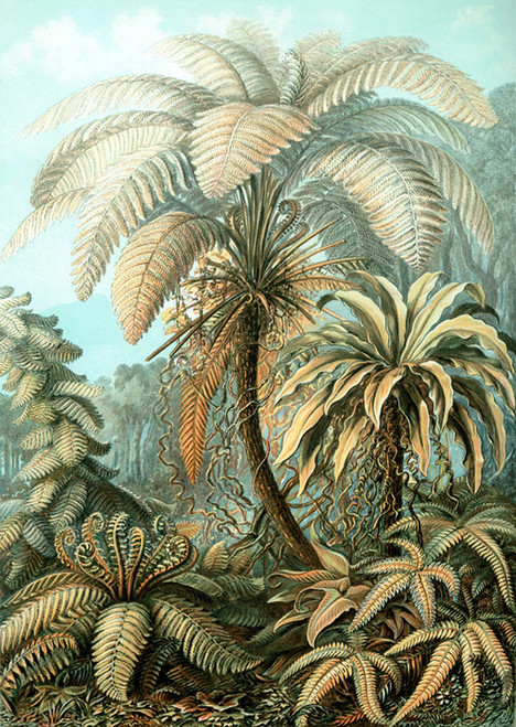 Art Prints of Filicinae or Fern, Plate 92 by Ernest Haeckel