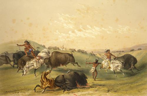 Art Prints of Buffalo Hunt by George Catlin