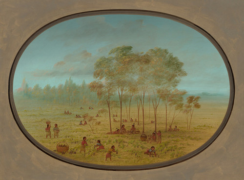 Art Prints of Kiowa Indians Gathering Wild Grapes by George Catlin