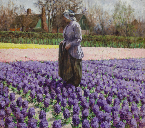 Art Prints of A Field of Hyacinths, Holland by George Hitchcock