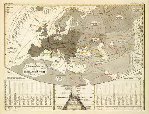 Art Prints of Distribution of the European Bird, 1845 (2515061) by Heinrich Berghaus