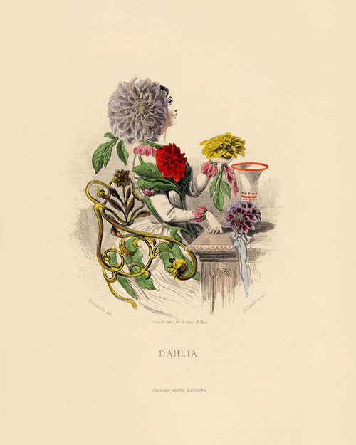 Art Prints of Dahlia by J. J. Grandville