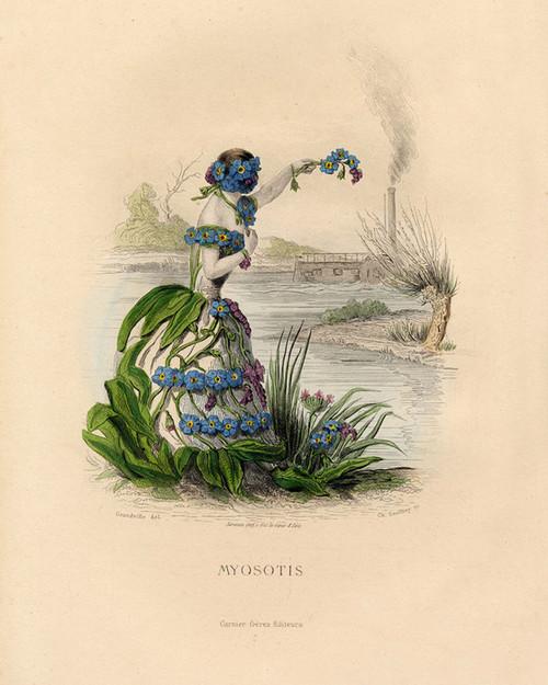 Art Prints of Forget Me Not by J. J. Grandville