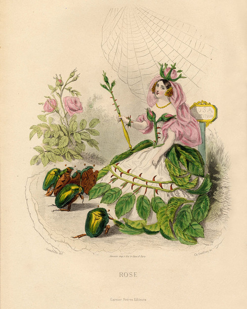 Art Prints of Rose by J. J. Grandville