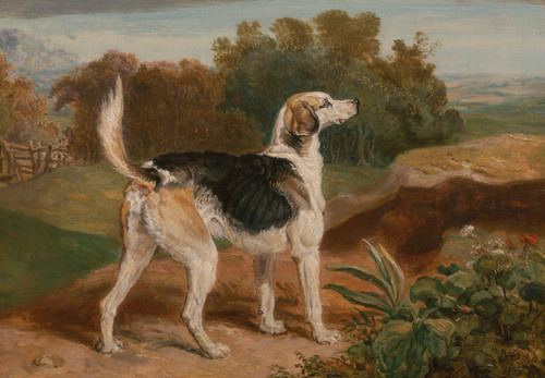 Art Prints of Ravager, One of the Lambton Hounds by James Ward