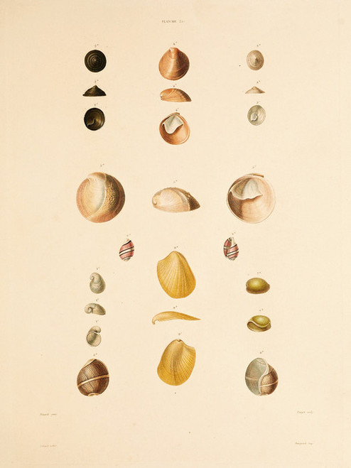 Art Prints of Shells, Plate 27 by Jean-Baptiste Lamarck
