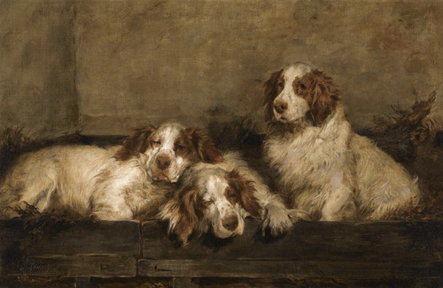 Art Prints of Clumber Spaniels in a Kennel by John Emms