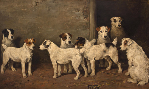 Art Prints of Eight Wire Fox Terriers in a Kennel by John Emms