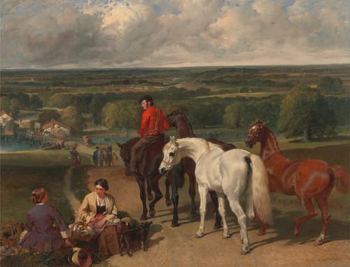Art Prints of Exercising the Royal Horses by John Frederick Herring
