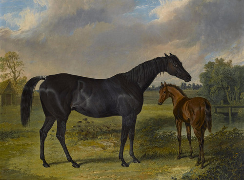 Art Prints of Pipylina and Foal by John Frederick Herring