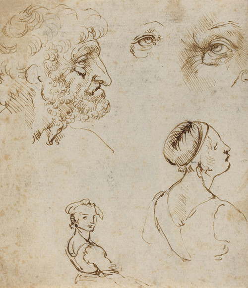 Art Prints of Sheet of Studies 1470-80 by Leonardo da Vinci