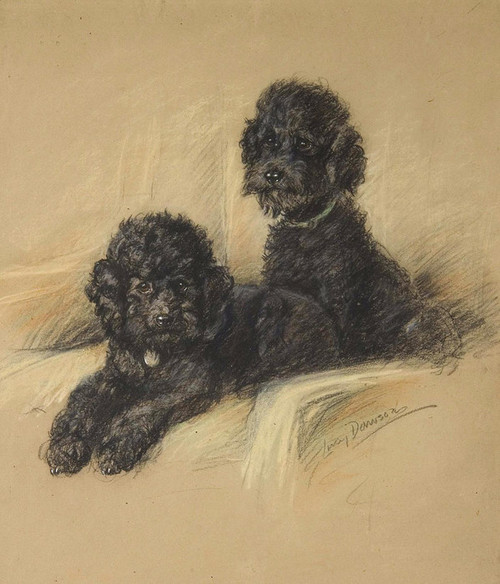 Art Prints of A Pair of Poodles by Lucy Dawson