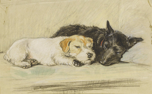 Art Prints of An Afternoon Nap, Wire Hair and Scottish Terrier by Lucy Dawson