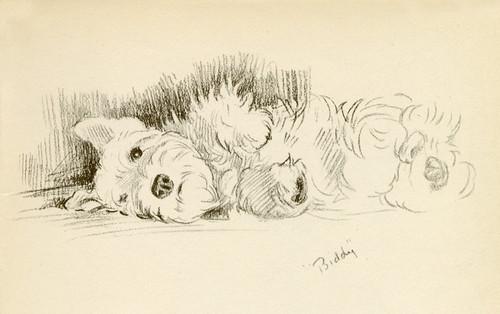 Art Prints of Biddy, Sealyham by Lucy Dawson