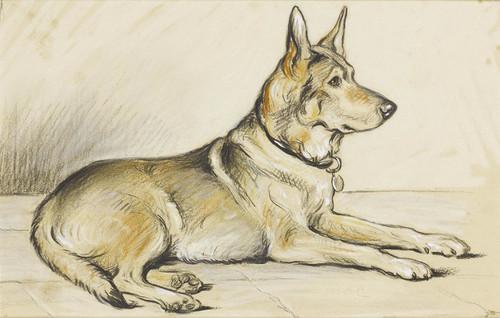 Art Prints of German Shepherd by Lucy Dawson