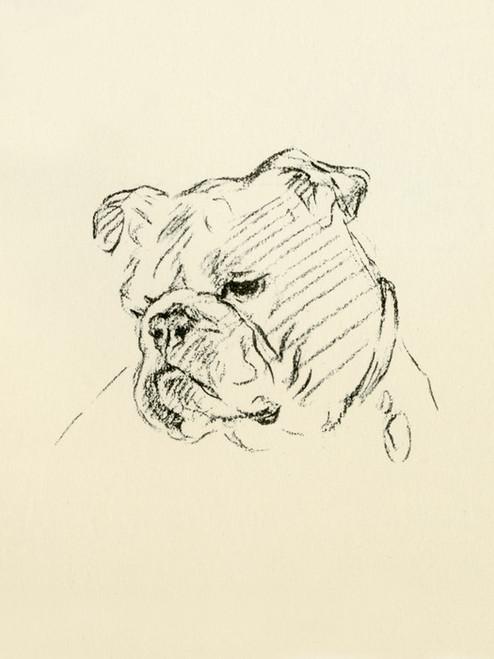 Art Prints of Head of a Bulldog by Lucy Dawson
