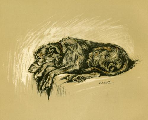 Art Prints of Irish Wolfhound by Lucy Dawson