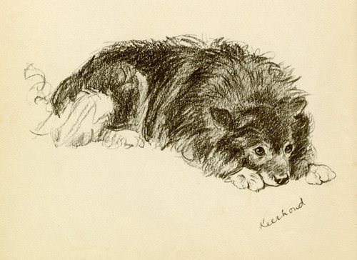 Art Prints of Johnny, the Keeshond by Lucy Dawson