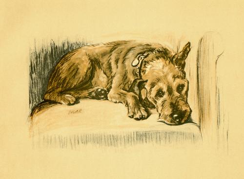 Art Prints of Patrick by Lucy Dawson