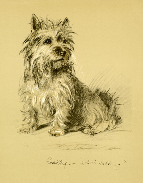 Art Prints of Sally, Who's Calling, Cairn Terrier by Lucy Dawson
