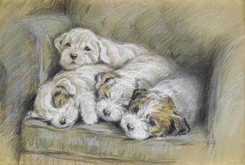 Art Prints of Sealyham Puppies by Lucy Dawson