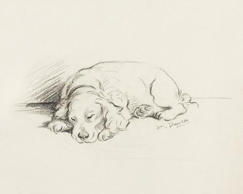 Art Prints of Spaniel by Lucy Dawson