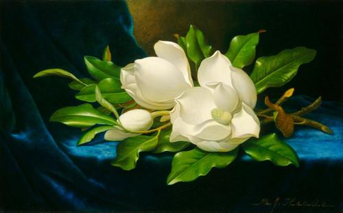 Art Prints of Giant Magnolias on a Blue Velvet Cloth by Martin Johnson Heade