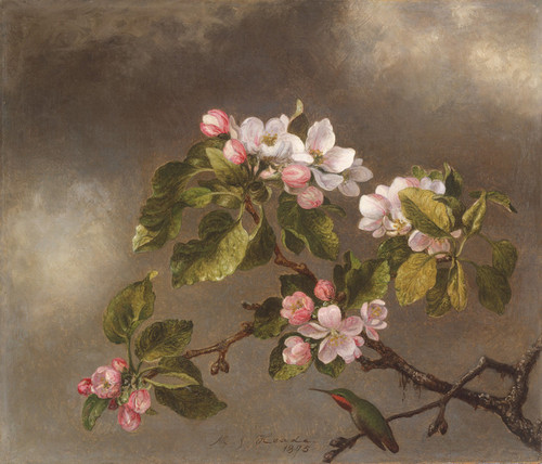 Art Prints of Hummingbird and Apple Blossoms by Martin Johnson Heade