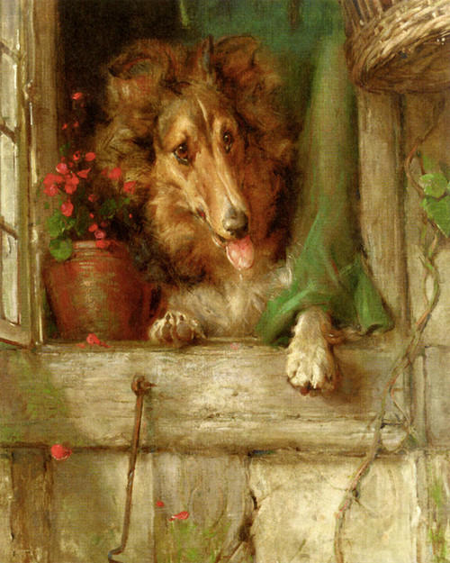 Art Prints of A Collie in a Window by Philip Eustace Stretton