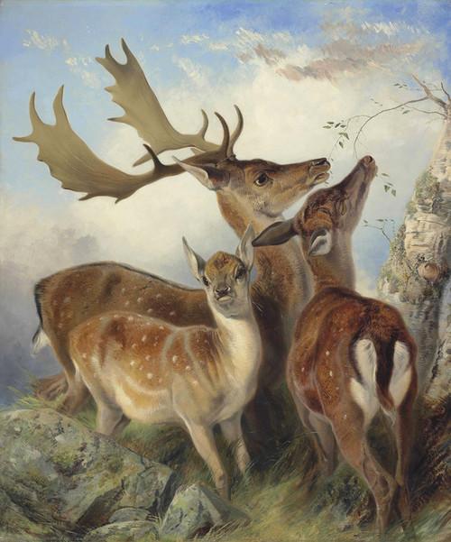 Art Prints of Fallow Deer by Richard Ansdell
