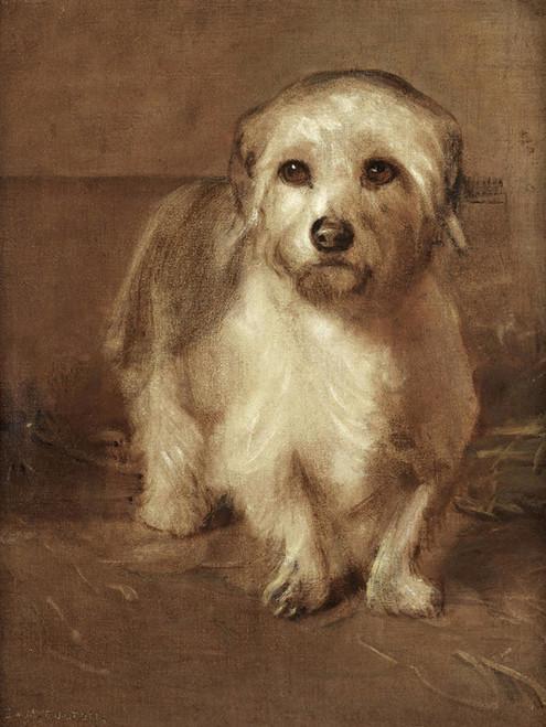 Art Prints of A White Terrier by Samuel Fulton
